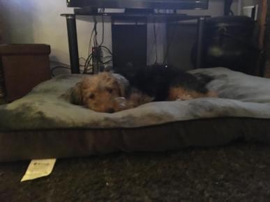Dylan on big bed