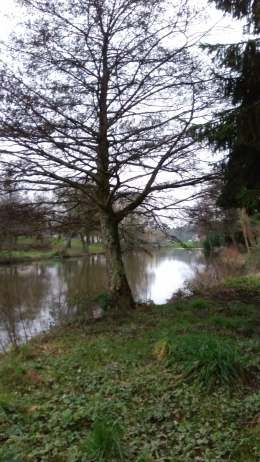river Ambrieres Winter 2018