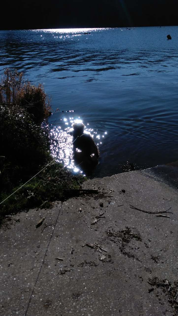 harley in the river feb winters day